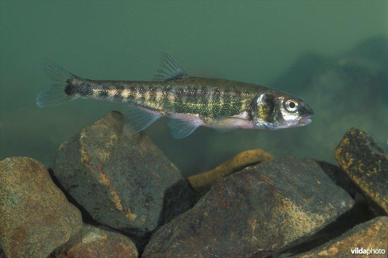 Vijver inleiding for Vissen vijver